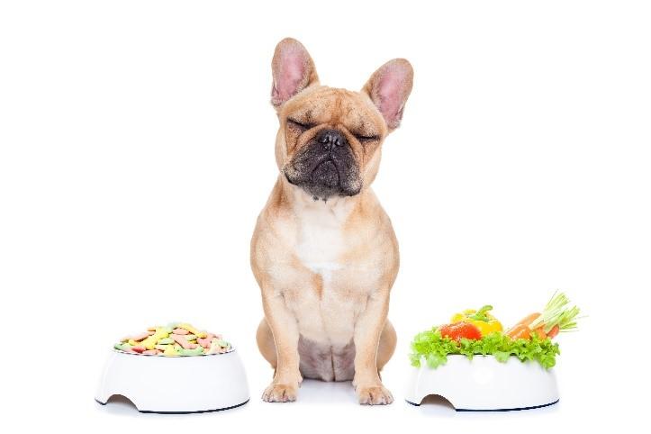 L'alimentation canine : vérités et idées reçues