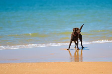 La Leishmaniose, maladie des vacances dans le sud